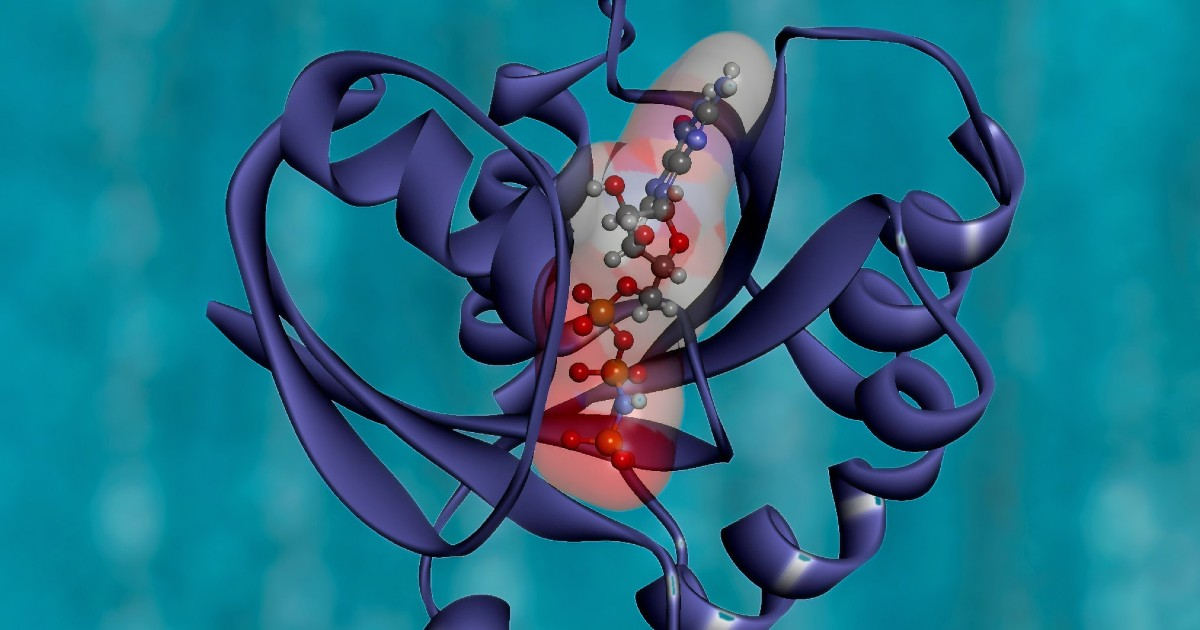 Why Does Predicting a Protein's 3D Structure Matter? The Biological Impact of AI System AlphaFold